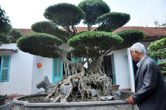 Vườn cảnh tiền tỷ của lão nông chơi cây nổi tiếng Hà thành - ảnh 9