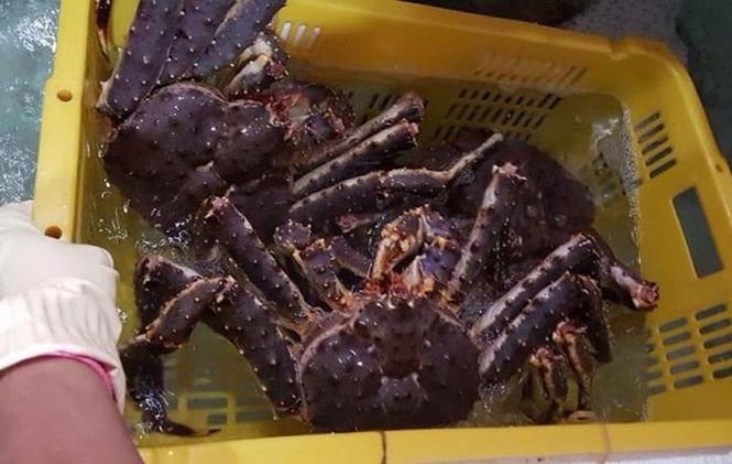 Đại gia Hà thành săn loài cua dài 1 mét giá 10 triệu mở tiệc - ảnh 3
