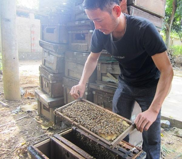 Tỷ phú từ nuôi ong lấy mật - ảnh 1