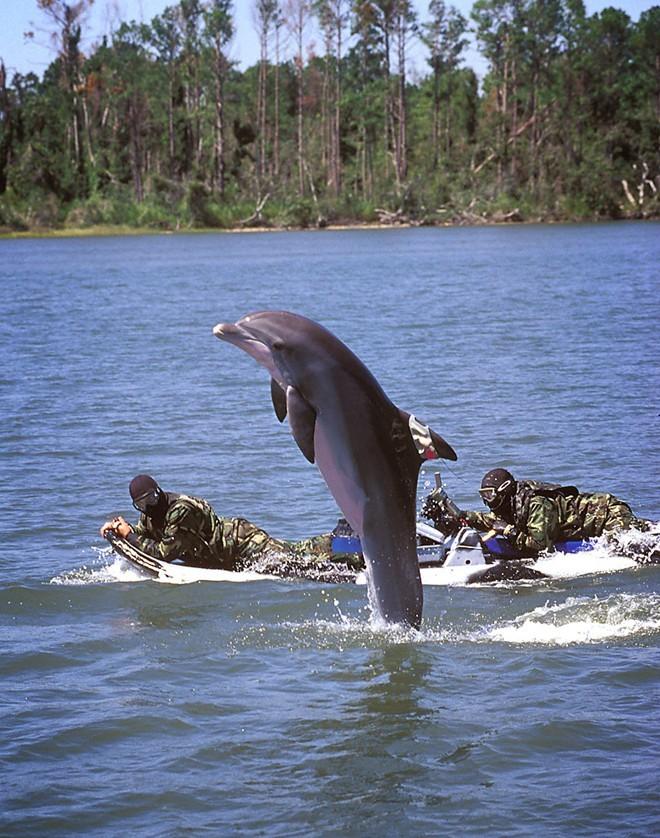 Vén màn bí mật về đội biệt kích SEAL - ảnh 6