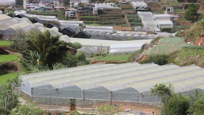 Đẹp lạ kỳ vườn dâu công nghệ cao của nông dân Đà Lạt - ảnh 1