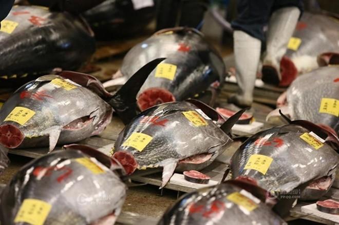 Con cá ngừ 180kg trúng đấu giá 750 triệu đồng - ảnh 2