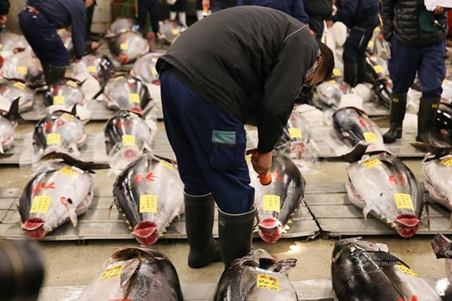 Con cá ngừ 180kg trúng đấu giá 750 triệu đồng - ảnh 3