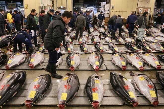 Con cá ngừ 180kg trúng đấu giá 750 triệu đồng - ảnh 4