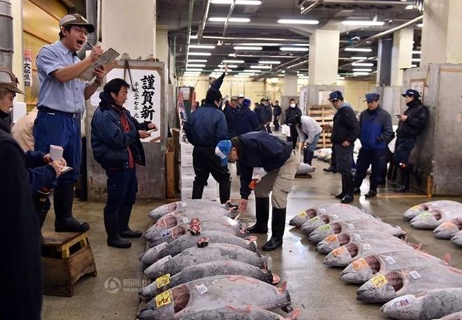 Con cá ngừ 180kg trúng đấu giá 750 triệu đồng - ảnh 8