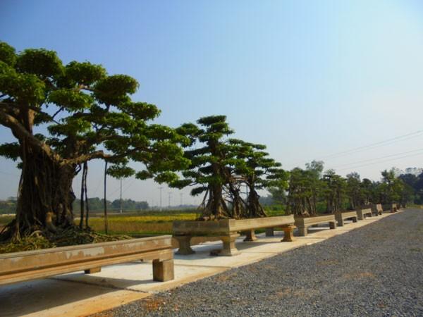 Dàn cây cảnh 120 năm tuổi 'gạ' giá 5 tỷ đồng không bán - ảnh 1