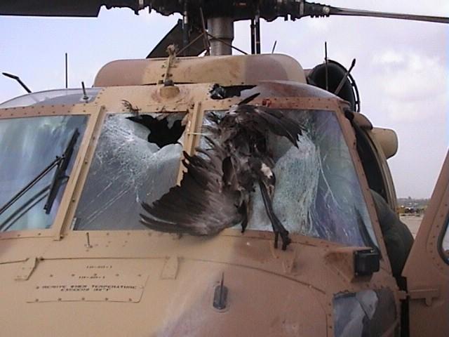 Những tai nạn máy bay do chim va vào - ảnh 1