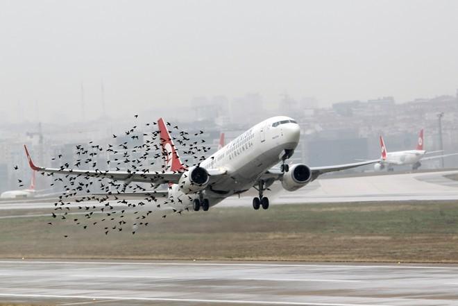 Những tai nạn máy bay do chim va vào - ảnh 7