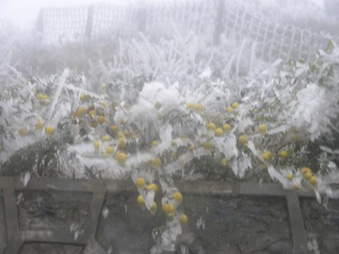 Đội mưa rét lên Sa Pa ngắm băng tuyết - ảnh 11