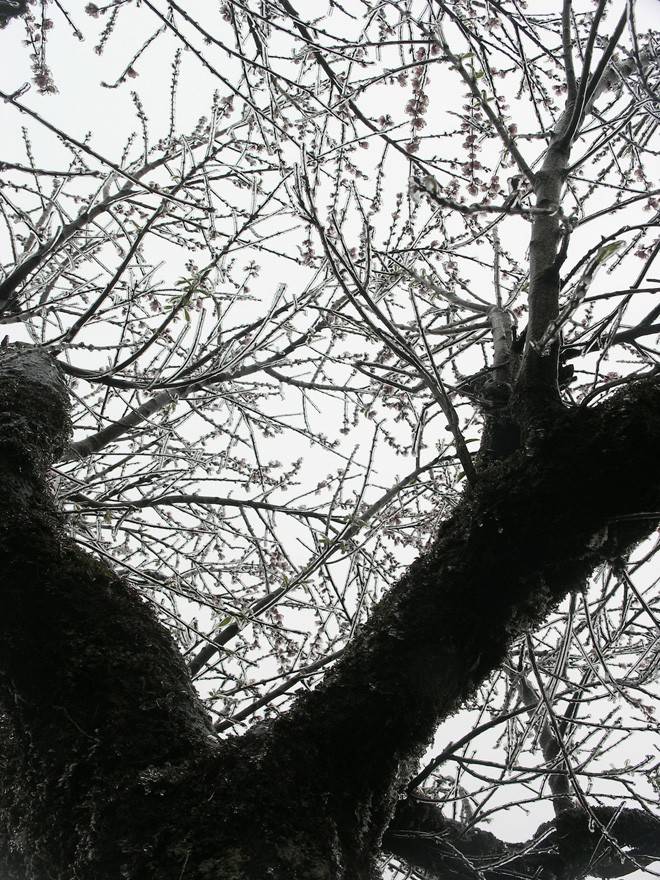 Đội mưa rét lên Sa Pa ngắm băng tuyết - ảnh 1