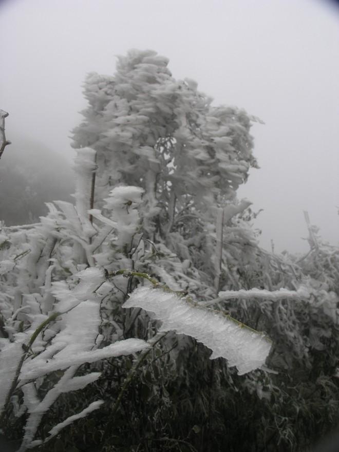 Đội mưa rét lên Sa Pa ngắm băng tuyết - ảnh 5