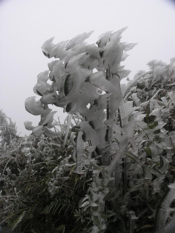Đội mưa rét lên Sa Pa ngắm băng tuyết - ảnh 6