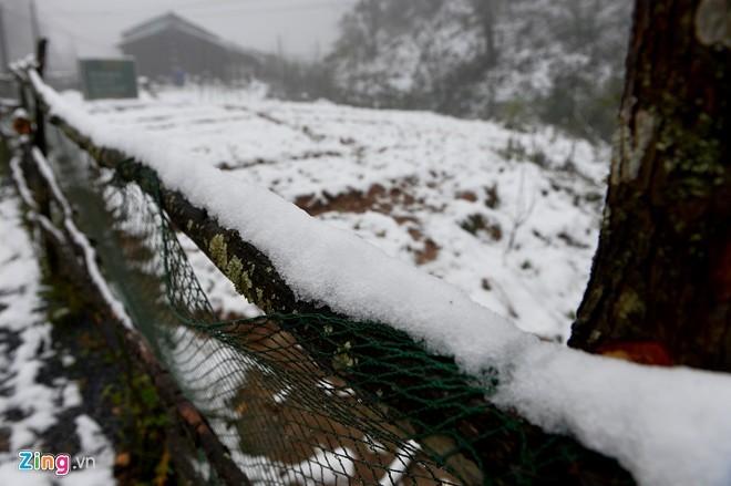10 hình ảnh ấn tượng về băng tuyết Sa Pa - ảnh 8