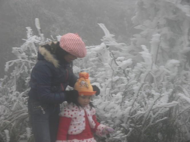 Đội mưa rét lên Sa Pa ngắm băng tuyết - ảnh 8