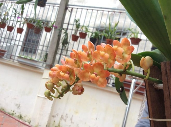 Mục sở thị vườn lan rừng vô giá của cô giáo Hà Nội - ảnh 13