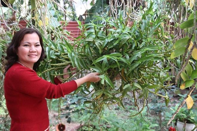 Mục sở thị vườn lan rừng vô giá của cô giáo Hà Nội - ảnh 6