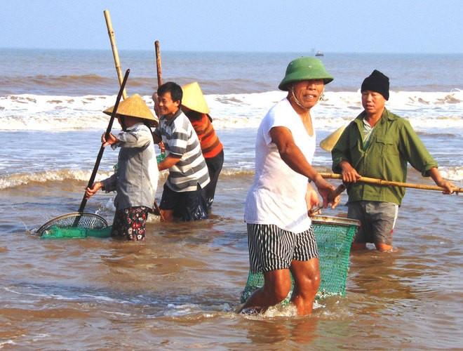 [ẢNH] Người dân ở Hà Tĩnh đổ ra biển vớt sò lông - ảnh 1
