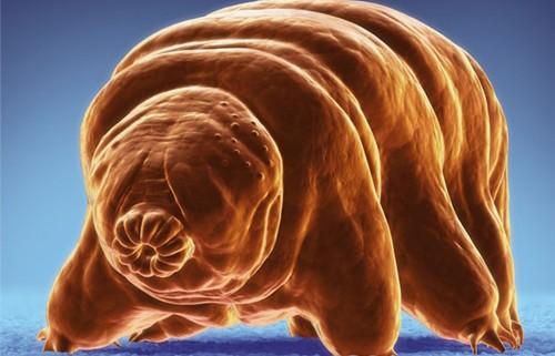 10 loài động vật có khả năng kỳ lạ - ảnh 4