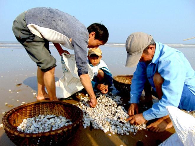 [ẢNH] Người dân ở Hà Tĩnh đổ ra biển vớt sò lông - ảnh 8