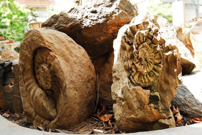 Bộ sưu tập đá tiền tỷ của đại gia Đồng Nai - ảnh 11