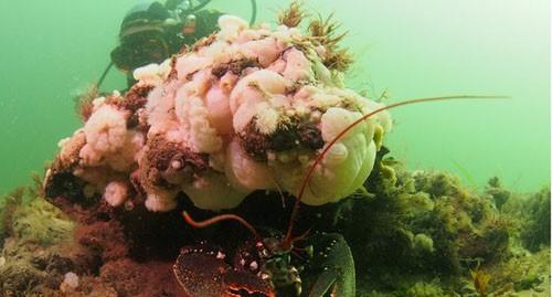 Dấu vết khu rừng tiền sử 10.000 năm dưới biển - ảnh 1