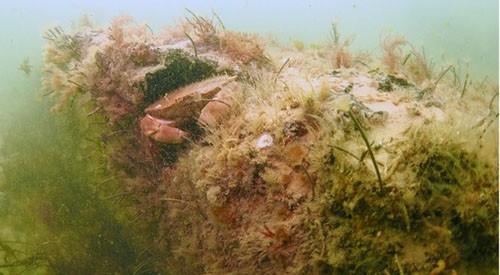Dấu vết khu rừng tiền sử 10.000 năm dưới biển - ảnh 2