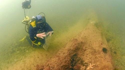 Dấu vết khu rừng tiền sử 10.000 năm dưới biển - ảnh 6