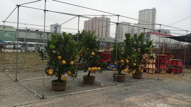 """Kỳ lạ chuyện """"vườn tràn ra phố"""" ở Hà Nội - ảnh 1"""
