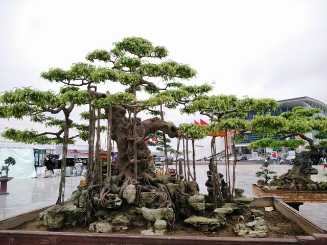 Ngắm những cây bonsai dáng 'siêu độc' có giá tiền triệu