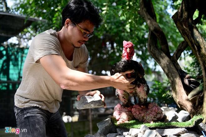 Cặp gà Đông Tảo chân khủng được trả giá 100 triệu đồng - ảnh 10