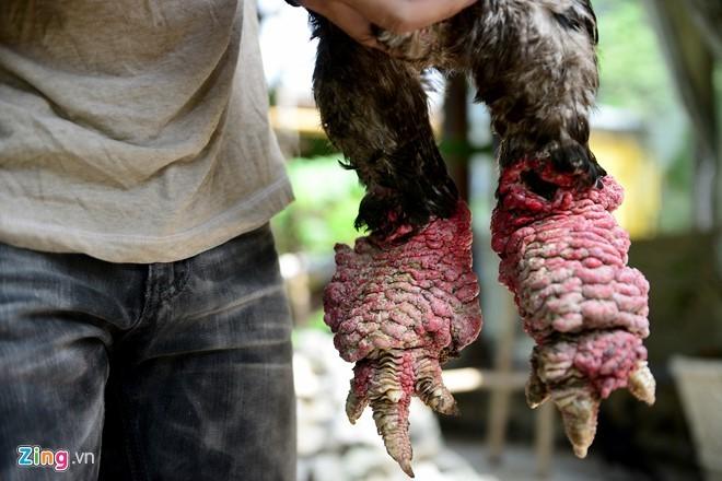 Cặp gà Đông Tảo chân khủng được trả giá 100 triệu đồng - ảnh 8