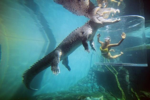 Bơi cùng cá sấu khổng lồ trong lồng tử thần - ảnh 3