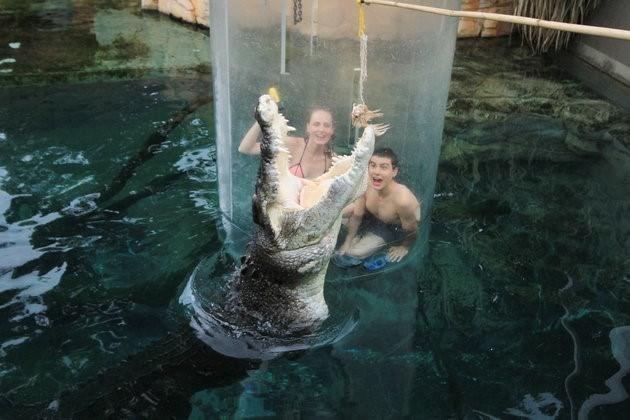 Bơi cùng cá sấu khổng lồ trong lồng tử thần - ảnh 4