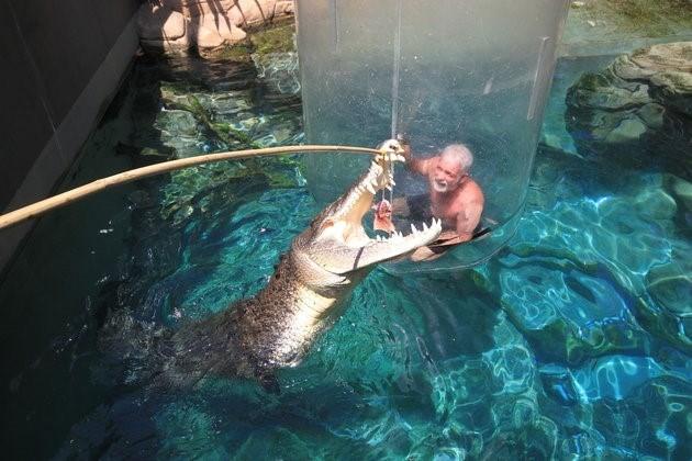 Bơi cùng cá sấu khổng lồ trong lồng tử thần - ảnh 6