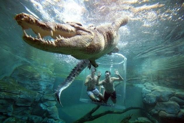 Bơi cùng cá sấu khổng lồ trong lồng tử thần - ảnh 7