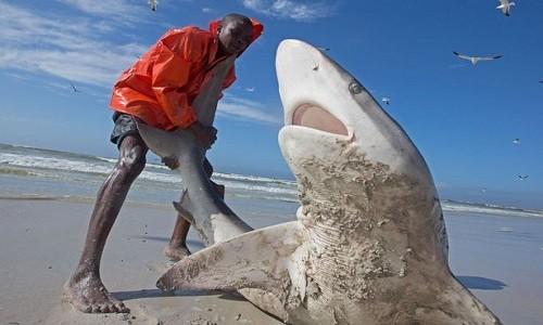 Ngư dân mạo hiểm kéo cá mập dài 2,5 mét về biển - ảnh 1