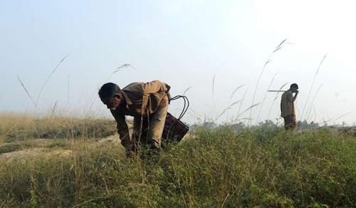 Bộ lạc kiếm sống nhờ bắt rắn độc ở Ấn Độ - ảnh 5