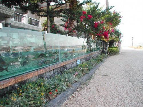 Đại gia dùng bể cá, bạch tuộc làm hàng rào quanh nhà - ảnh 2