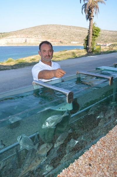 Đại gia dùng bể cá, bạch tuộc làm hàng rào quanh nhà - ảnh 3