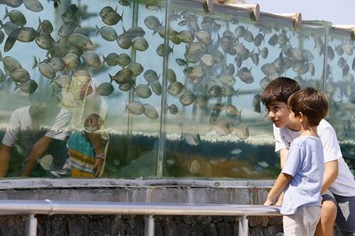 Đại gia dùng bể cá, bạch tuộc làm hàng rào quanh nhà - ảnh 5