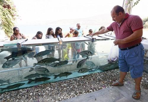 Đại gia dùng bể cá, bạch tuộc làm hàng rào quanh nhà - ảnh 6