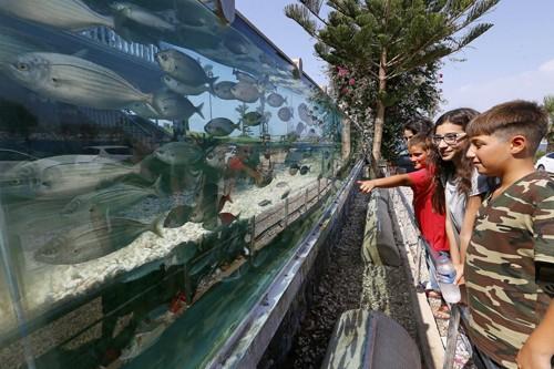 Đại gia dùng bể cá, bạch tuộc làm hàng rào quanh nhà - ảnh 7