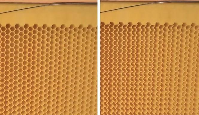 Phát minh thiên tài giúp thu hoạch mật ong mà không cần dỡ tổ  - ảnh 2