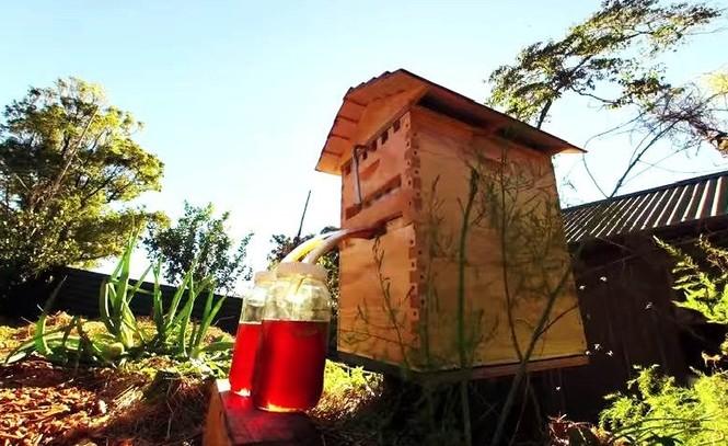 Phát minh thiên tài giúp thu hoạch mật ong mà không cần dỡ tổ  - ảnh 4