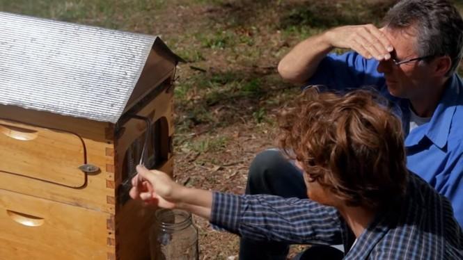 Phát minh thiên tài giúp thu hoạch mật ong mà không cần dỡ tổ  - ảnh 1