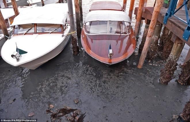 Thành phố nổi Venice có thể biến mất vì cạn nước - ảnh 4