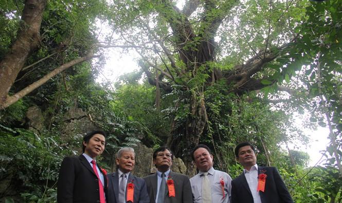 Công nhận 7 cây di sản ở danh thắng Ngũ Hành Sơn - ảnh 1