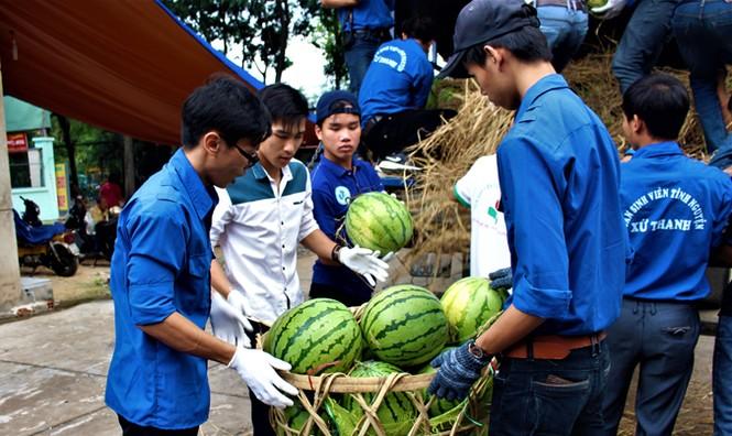 Sinh viên TP. HCM bán dưa hấu giúp nông dân Quảng Ngãi - ảnh 9
