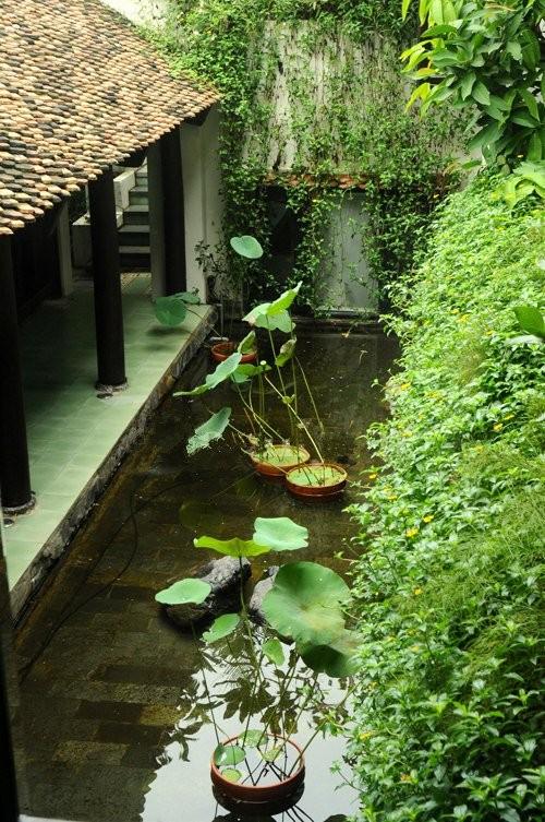 Đọ vườn nhà như trong cổ tích của Hồng Nhung - Mỹ Linh - ảnh 22