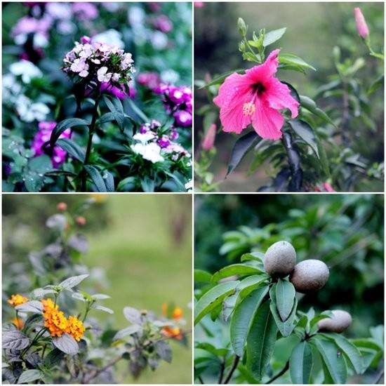 Đọ vườn nhà như trong cổ tích của Hồng Nhung - Mỹ Linh - ảnh 13